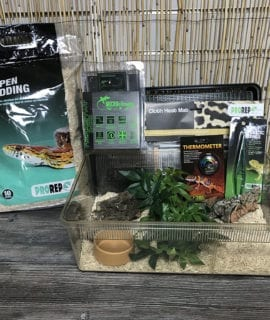 OUR Corn Snake Basic Hatchling Kit + Thermostat