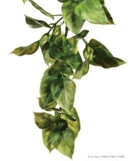 ET Plastic Plant Amapallo Medium, PT3011
