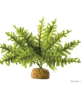 ET Boston Fern Small. PT-2990